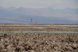 Salar de Atacama (© Lena Labryga / Weonlandia)