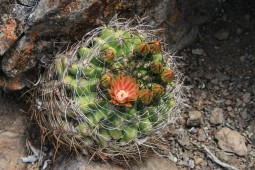 Kaktus Quisquito (© Lena Labryga / Weonlandia)