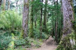 Im Nationalpark Huerquehue (© Lena Labryga / Weonlandia)