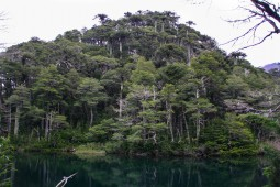 Lago Chico im Nationalpark Huerquehue (© Lena Labryga / Weonlandia)