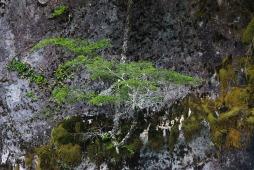 Bizzare Natur in Peulla (© Lena Labryga / Weonlandia)