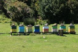 Bienenstöcke auf dem Weg in den Nationalpark (© Lena Labryga / Weonlandia)