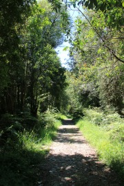 Im Nationalpark Alerce Andino (© Lena Labryga / Weonlandia)