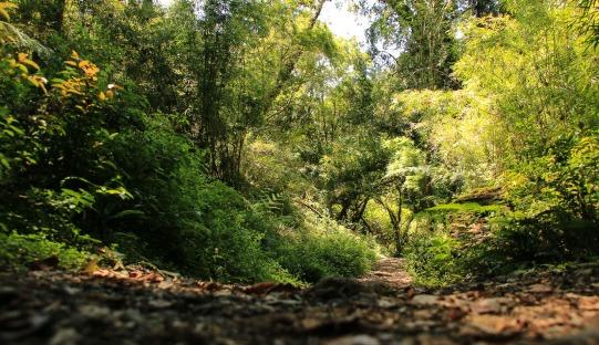 Waldweg im Nationalpark Alerce Andino (© Lena Labryga / Weonlandia)