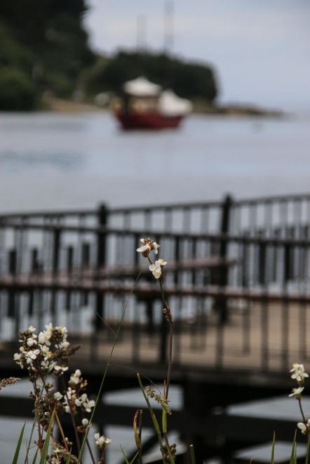 In der Bucht von Puerto Varas (© Lena Labryga / Weonlandia)