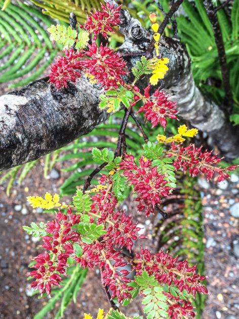 Farben der Natur im Tantauco Nationalpark (© Lena Labryga / Weonlandia)