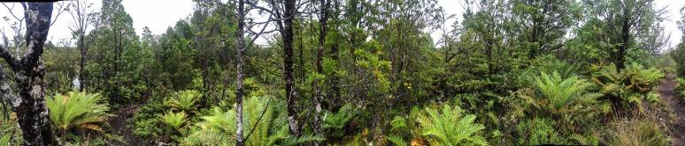 Im Tantauco Nationalpark (© Lena Labryga / Weonlandia)