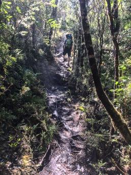 Mystische Stimmung im Tantauco Nationalpark (© Lena Labryga / Weonlandia)