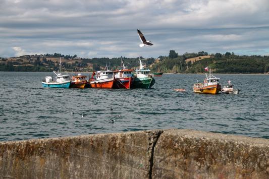 Im Hafen von Castro (© Lena Labryga / Weonlandia)