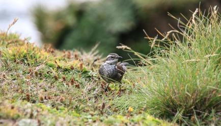 Vogel (© Lena Labryga / Weonlandia)