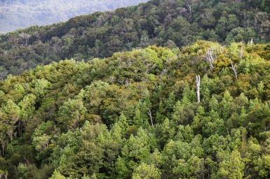 Wald bis zum Horizont (© Lena Labryga / Weonlandia)