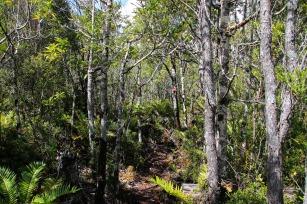 Durch den Tantauco Nationalpark (© Lena Labryga / Weonlandia)