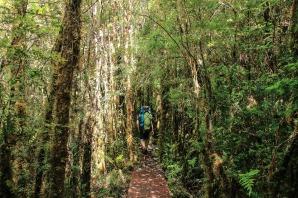 Wanderung durch den Tantauco Nationalpark (© Lena Labryga / Weonlandia)