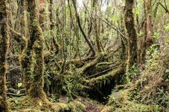Tantauco Nationalpark (© Lena Labryga / Weonlandia)