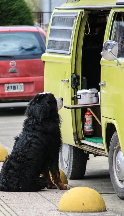 Hund in Hoffnung (© Lena Labryga / Weonlandia)