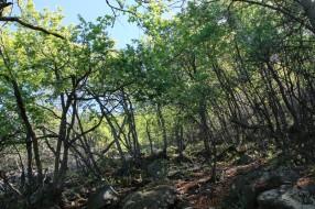Wald La Campana (© Lena Labryga / Weonlandia)