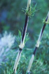 Bambus (© Lena Labryga / Weonlandia)