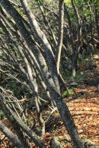Bäume La Campana (© Lena Labryga / Weonlandia)